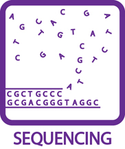 Sequencing Icon